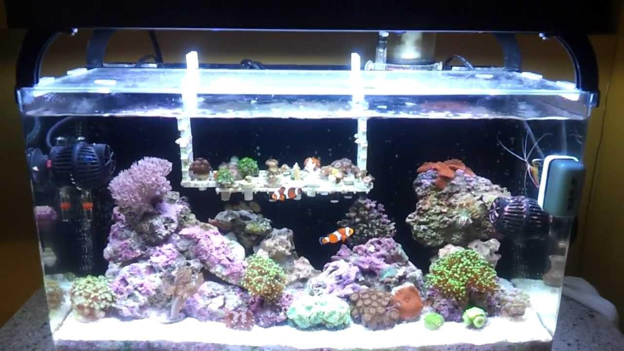 Fashionable innovation - nano-aquarium