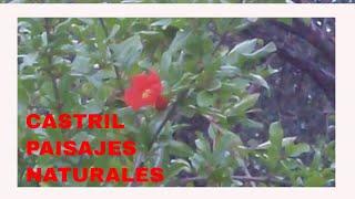 CASTRIL #PUEBLOS BONITOS ANDALUCIA: Impactantes vistas ⛰️