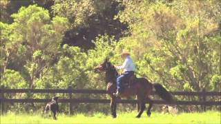 Solving Trail Problems - The Horse that Jigs Home