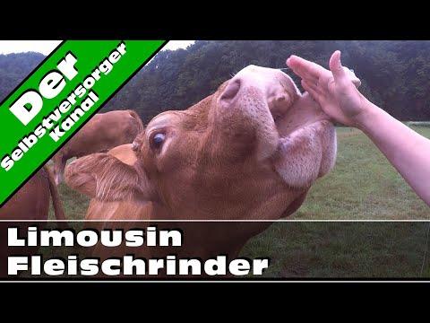 Limousin Fleischrinder