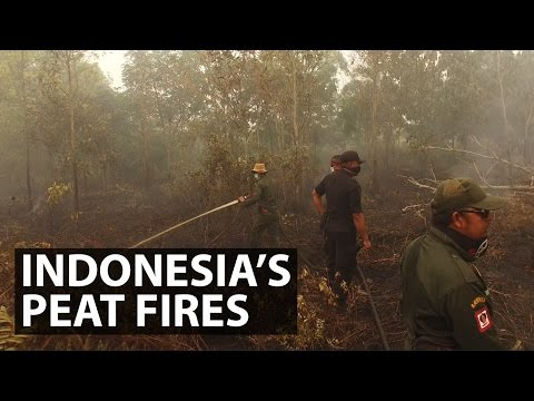 Indonesia's Peat Fires | Get Real | CNA Insider
