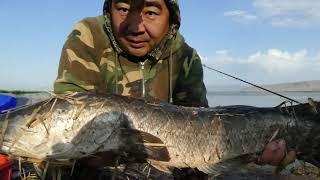 СУПЕР РЫБАЛКА 2021 на реке ИЛИ Михайловское озеро Манул САЗАН ЗАЧЕТНЫЙ ЗМЕЕГОЛОВ ЛЕЩ ЧАСТЬ 2