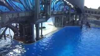 Makani invites Kasatka to slide over - Sept 7 2014 - SeaWorld San Diego