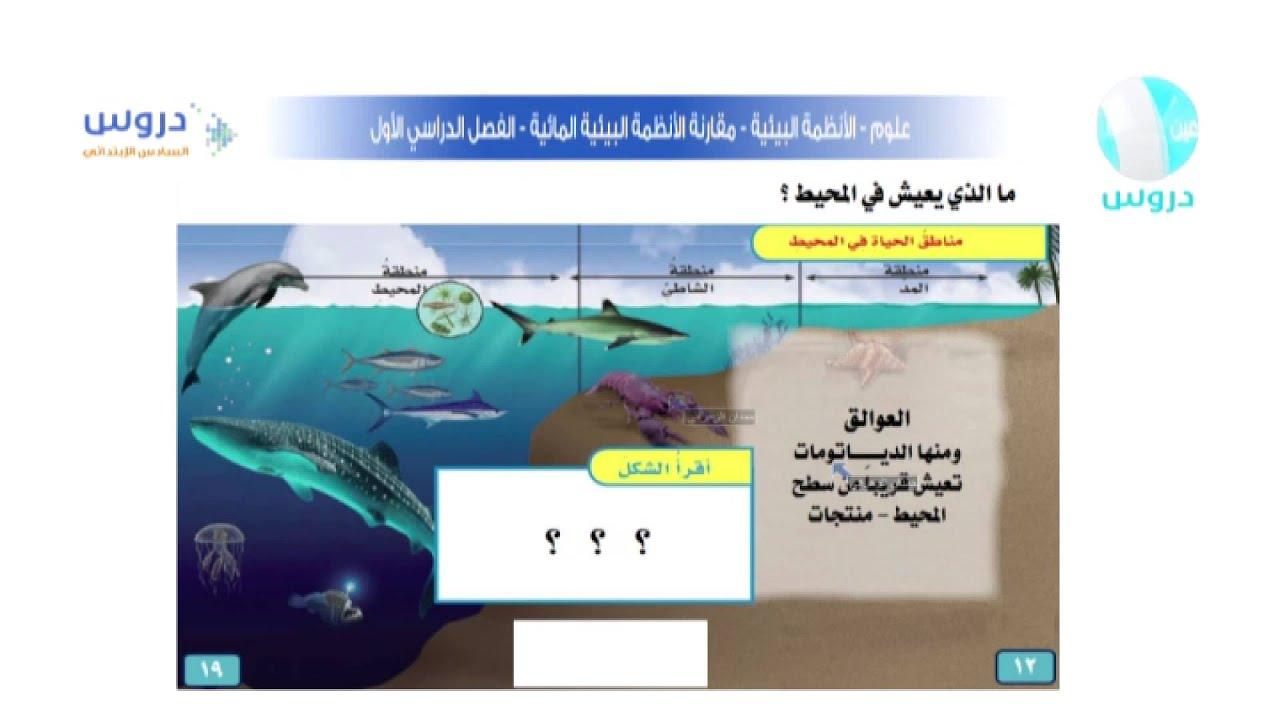 السادس الابتدائي الفصل الدراسي الاول علوم الانظمة البيئية مقارنة الانظمة البيئية المائية Youtube