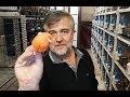 yorkshire kanarya Üreticisi ali abinin Üretim hanesindeyiz
