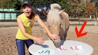 BEN IK EEN GOED BAASJE? | Paard beantwoordt vragen #01