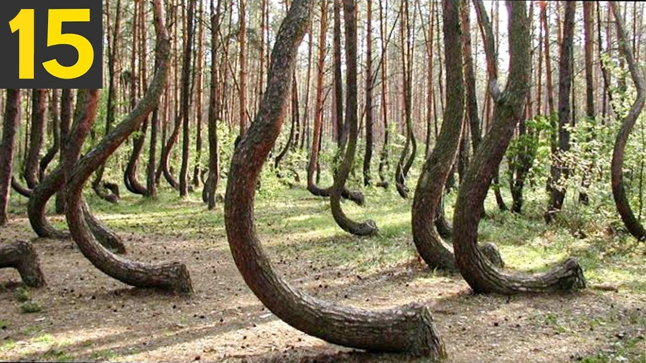 15 Most Unusual Forests