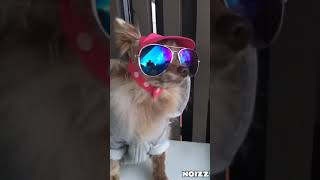 Best of Funny Animals Videos Collection #8