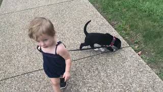 The dog walks the baby while the baby walks the dog