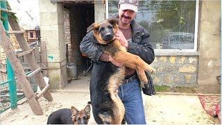 """Папины Дети. Щенки Немецкой овчарки 4 мес. Daddy""""s kids. Puppies German Shepherd 4 months. Одесса."""