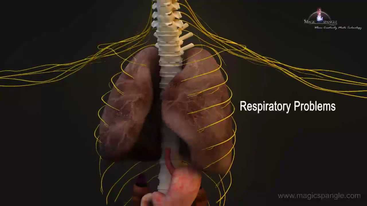 3d Medical Animation Central Nervous System Youtube