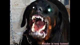 Rottweiler attack thumbnail