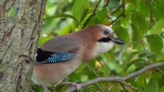 Bitte füttert unsere Vögel - Vor allem jetzt im Winter