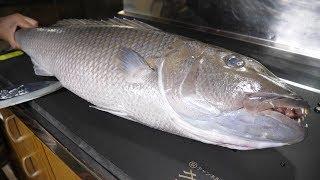 【ノーカット】古代魚のような青い魚。お刺身で食べてみた。お味は?