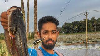 പുതിയ റോഡിൽ ആദ്യത്തെ ചേറുമീൻ | TOMAN STRIKE | kerala fishing snakehead