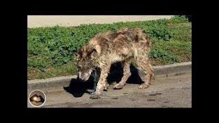 感動 犬 救助 傷ついて瀕死の捨てられた犬を保護した結果…驚き、そして...