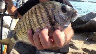 Секреты рыбалки  морского карася