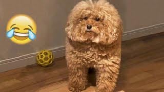 AMOGUS DOG