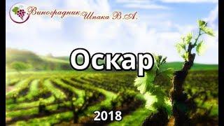 Оскар урожая 2018 года
