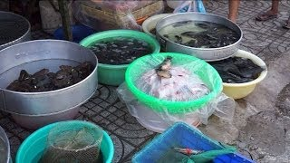 Frogs & Fishes - Phu Quoc Market Vietnam