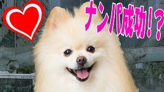 渋谷駅でナンパしたら巣まで付いてきた thumbnail