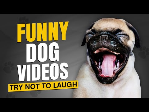 🤣 Funny Dog Videos 2020 Compilation – 🐶 Funniest dogs of 2020 🤣 🐶 It's Time To Laugh With Dog's Life