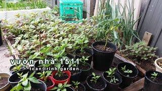 TRỒNG RAU, LÀM VƯỜN 1511 REVIEW toan trinh garden