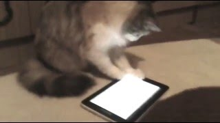 Летсплей от кошки. Игра для кошек на планшете. Game for Cats.