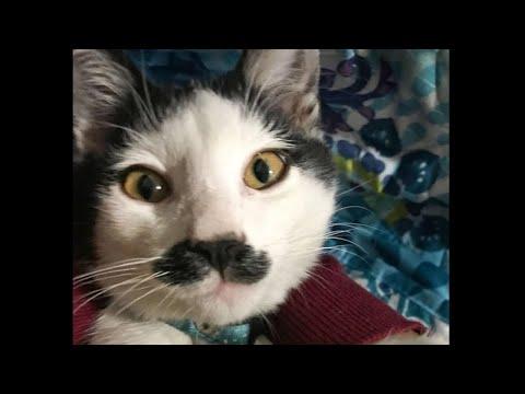 Четвероногий мачо кот из за 20 февраля