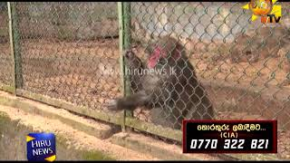 Fine if eating food for animals in Dehiwala
