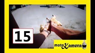 Motocykliści ratują zwierzęta cz.2 - motoKamera #15
