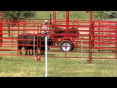 The USBCHA Nat'l Cattledog Finals