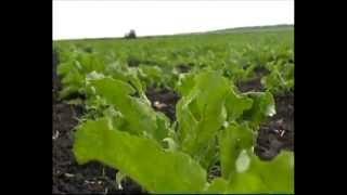 Высокоэффективный стимулятор роста растений Вымпел(, 2014-11-05T10:10:41.000Z)