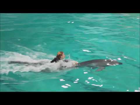 Плавание с дельфинами  Санкт Петербург  2018 год