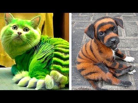 10 Животных, Которые Родились с Необычными Особенностями