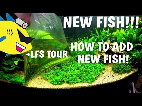 NEW FISH!!! How To Acclimate New Aquarium Fish +LFS Tour