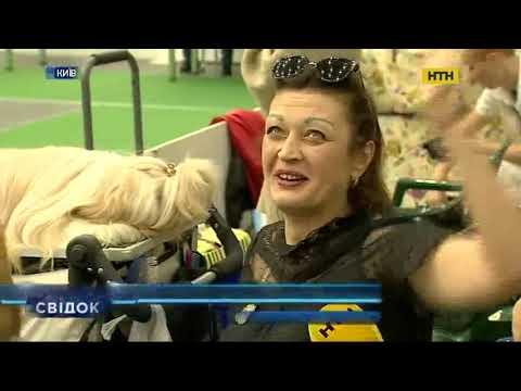 У Києві відкрилася міжнародна виставка собак