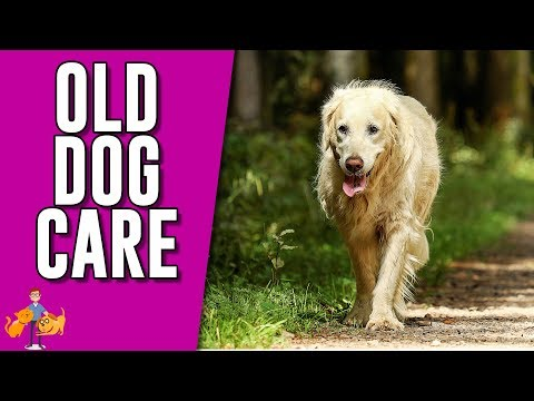How To Care For A Senior Dog (+ help them age with dignity)