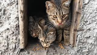 Душевное  видео,Кормим котят, Милая неразбериха, Холодно и тесно но с едой
