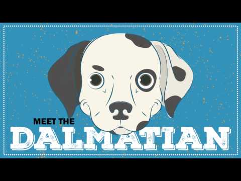 Breed Spotlight: the Dalmatian