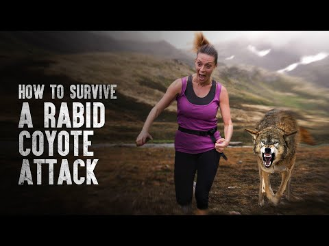 How to Survive a Rabid Coyote Attack