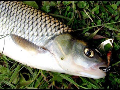 рыбалка в заповеднике на угре
