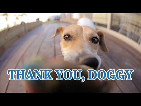 """Thank You, Doggy"" (Milo's Kitchen loves you!)"