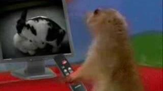 Drama Prairie Dog- Curses !!!! thumbnail