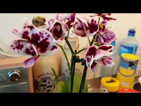 8 Марта!Мои новые Орхидеи!Куртки к паскеH@M ! Цветочный магазин !:)