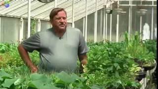 Organic Farm Revitalizes New Britain, Connecticut Neighborhood