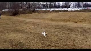 В Сыктывкаре выгуливают собак под запрещающим знаком