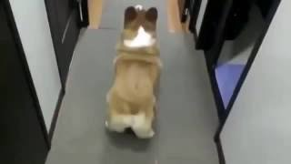 Собака трясет задом