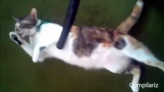 Смешные кошки - 01, прикольное видео, обхохочешься!!!!! Позитив!!!