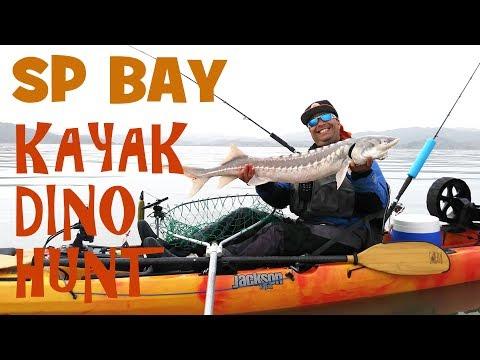 Kayak Sturgeon Fishing At San Pablo Bay